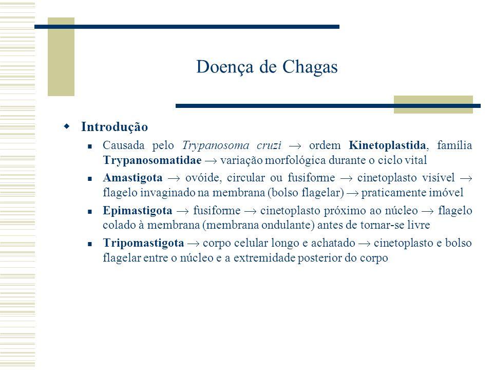 Doença de Chagas Introdução Causada pelo Trypanosoma cruzi ordem Kinetoplastida, família Trypanosomatidae variação morfológica durante o ciclo vital A