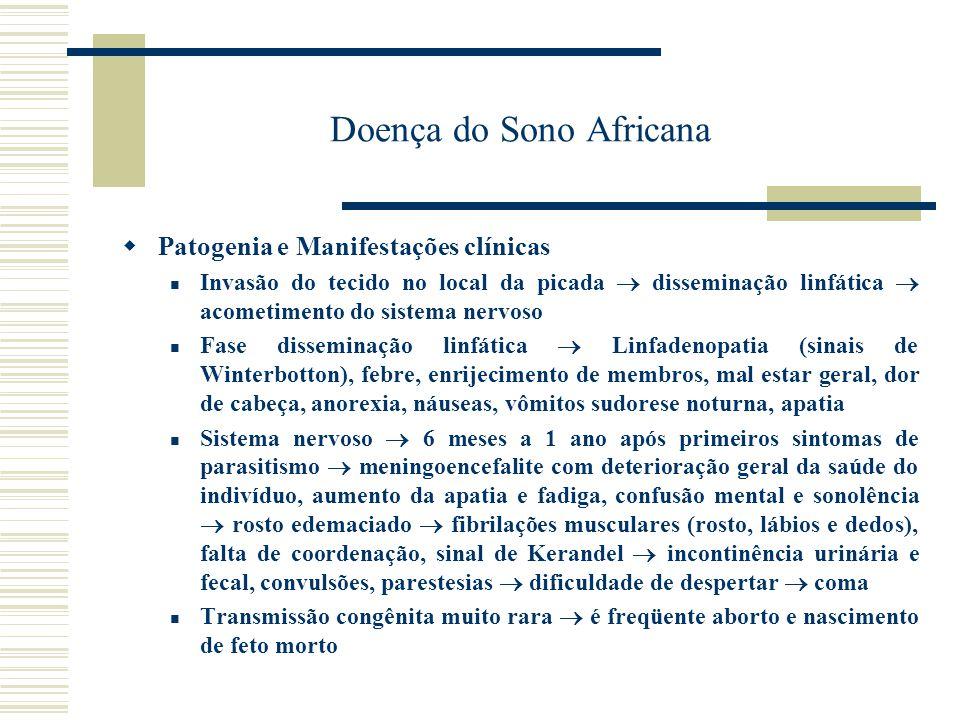 Doença do Sono Africana Diagnóstico Hipergamaglobulinemia (IgM) Pesquisa de parasitos no sangue Punção de biópsia de gânglios Pesquisa de IgM no líquor (tripanosomíase do SNC) Tratamento e Profilaxia Melarsoprol, suramina e pentamidina Limpeza da vegetação ao longo dos rios (inseticidas) Vigilância na detenção e tratamento dos casos Uso de repelentes e telas Pentamidina como medicamento profilático