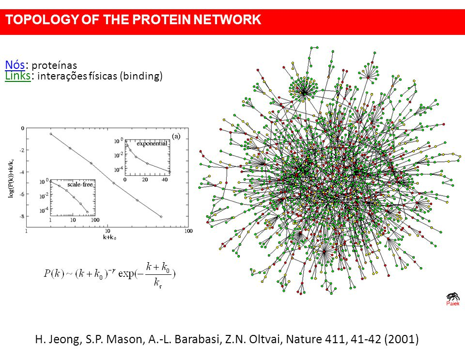 H. Jeong, S.P. Mason, A.-L. Barabasi, Z.N. Oltvai, Nature 411, 41-42 (2001) Nós: proteínas Links: interações físicas (binding) TOPOLOGY OF THE PROTEIN
