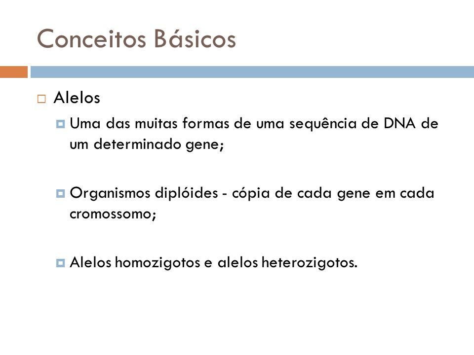 Conceitos Básicos Alelos Uma das muitas formas de uma sequência de DNA de um determinado gene; Organismos diplóides - cópia de cada gene em cada cromo