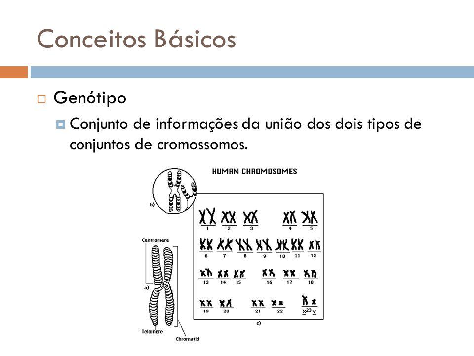Conceitos Básicos Haplótipo Sequência de dados de uma única cópia (de duas possíveis) do cromossomo; Pode ser um locus, vários loci, ou um cromossomo inteiro; SNPs; Contribuição genética para determinado traço.