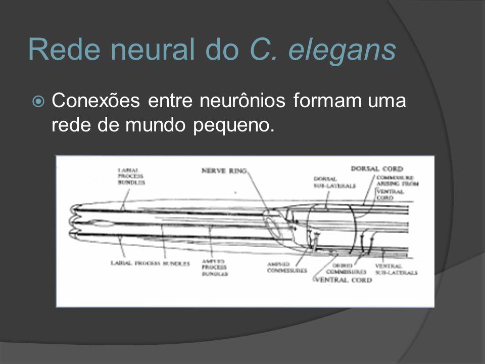 Rede neural do C. elegans Conexões entre neurônios formam uma rede de mundo pequeno.
