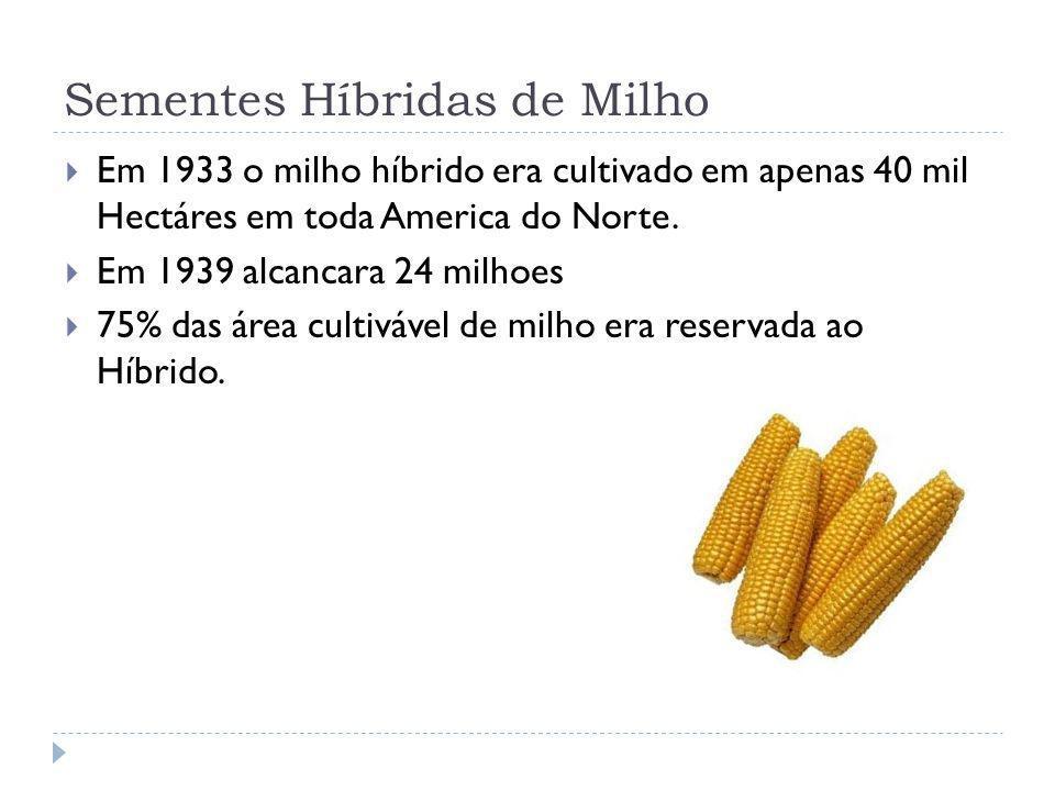 Sementes Híbridas de Milho Em 1933 o milho híbrido era cultivado em apenas 40 mil Hectáres em toda America do Norte. Em 1939 alcancara 24 milhoes 75%