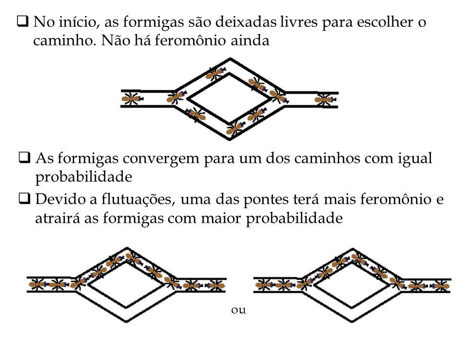 No início, as formigas são deixadas livres para escolher o caminho. Não há feromônio ainda As formigas convergem para um dos caminhos com igual probab
