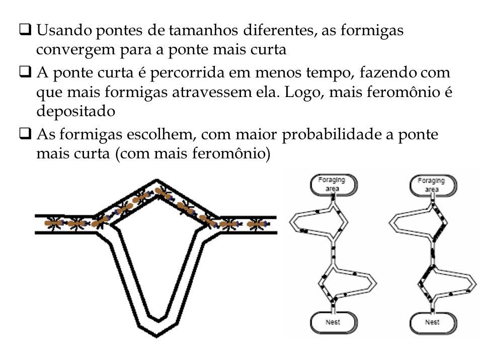 Usando pontes de tamanhos diferentes, as formigas convergem para a ponte mais curta A ponte curta é percorrida em menos tempo, fazendo com que mais fo