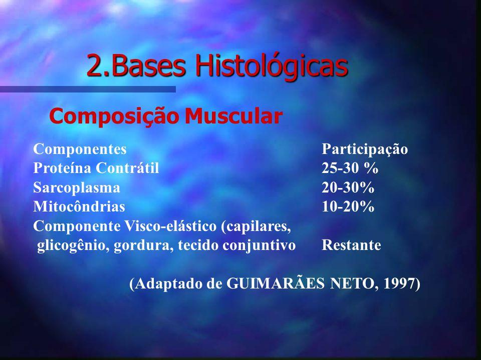 Placa neuromotora