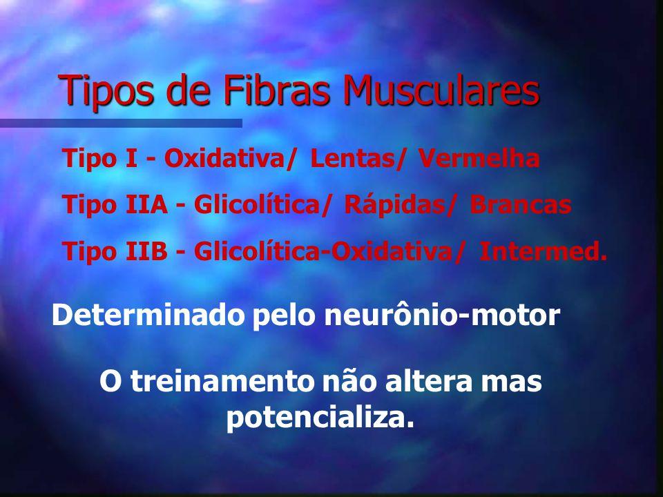 2.Bases Histológicas Composição Muscular ComponentesParticipação Proteína Contrátil25-30 % Sarcoplasma20-30% Mitocôndrias10-20% Componente Visco-elást