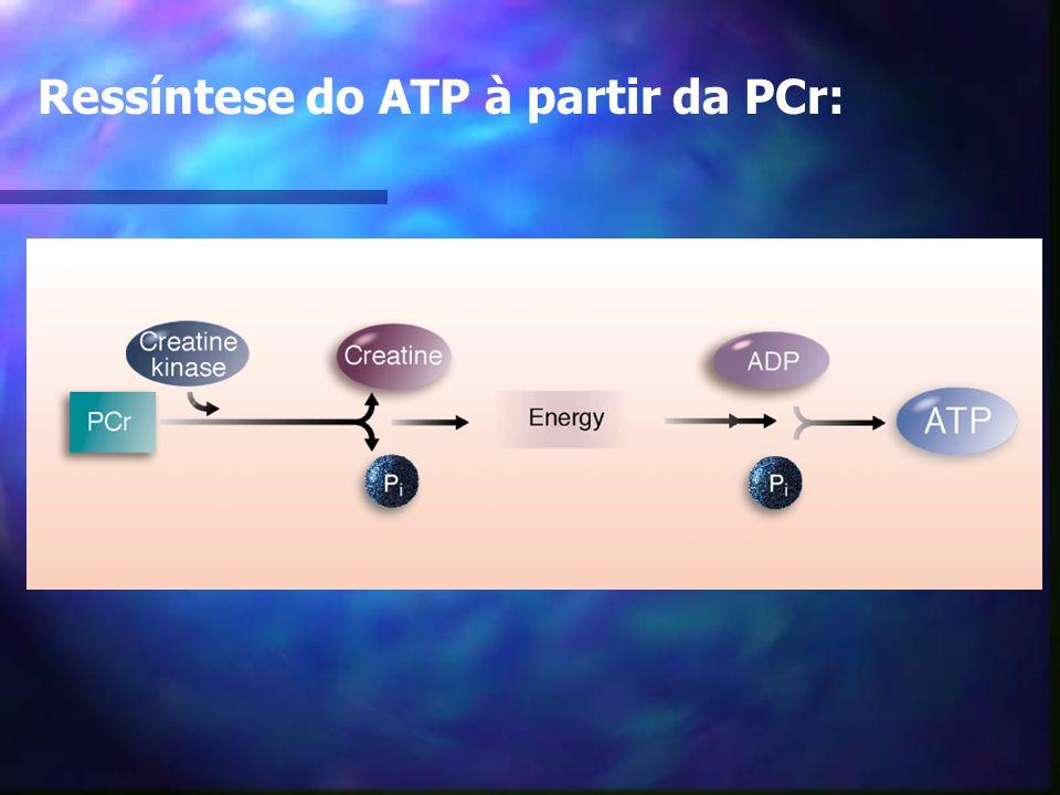 Bases Bioenergéticas Sistema ATP-PC 10 - 15 seg. Via metabólica alática Ativ. de alta intensidade