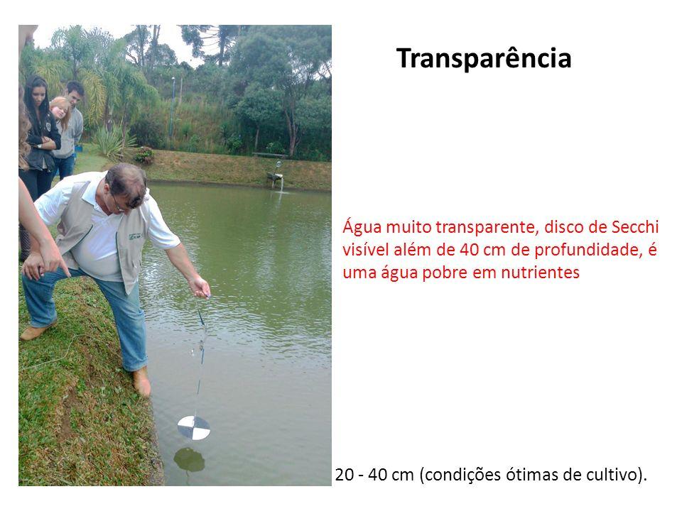 Transparência 20 - 40 cm (condições ótimas de cultivo). Água muito transparente, disco de Secchi visível além de 40 cm de profundidade, é uma água pob