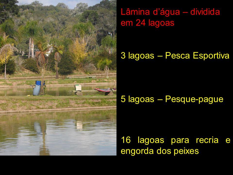 Lâmina dágua – dividida em 24 lagoas 3 lagoas – Pesca Esportiva 5 lagoas – Pesque-pague 16 lagoas para recria e engorda dos peixes