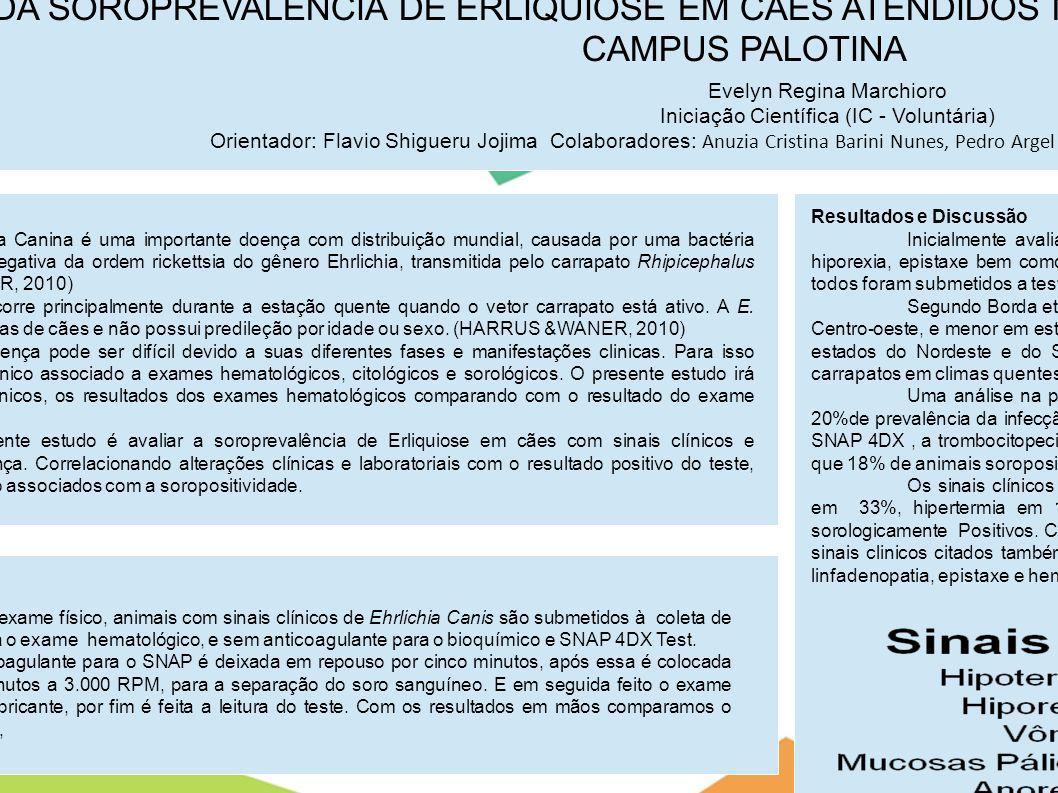 AVALIAÇÃO DA SOROPREVALÊNCIA DE ERLIQUIOSE EM CÃES ATENDIDOS NO HOSPITAL VETERINÁRIO DA UFPR- CAMPUS PALOTINA Evelyn Regina Marchioro Iniciação Cientí
