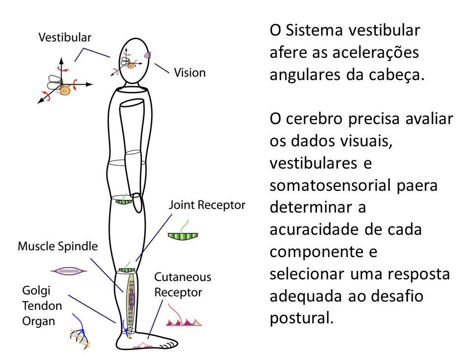 O Sistema vestibular afere as acelerações angulares da cabeça. O cerebro precisa avaliar os dados visuais, vestibulares e somatosensorial paera determ