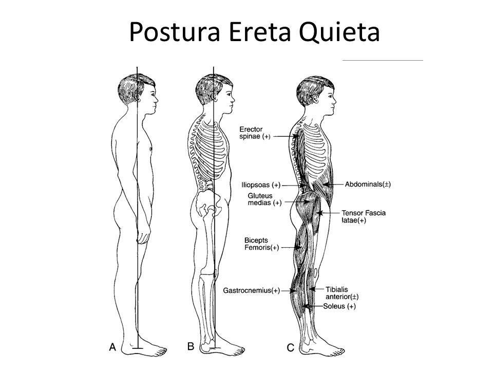 Postura Ereta Quieta