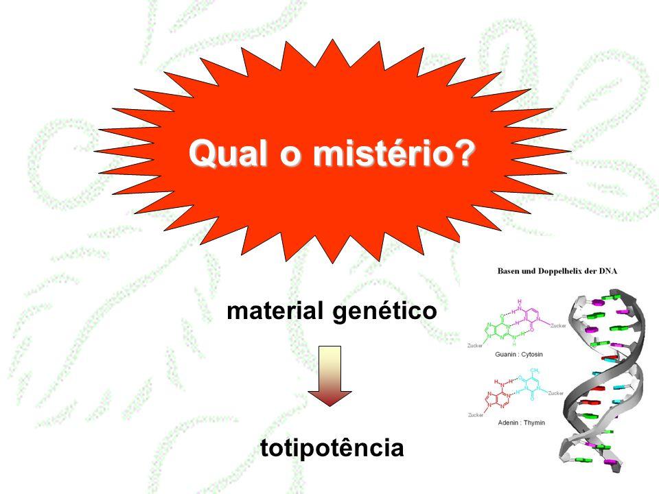 Metodologias: cultura de células = suspensão
