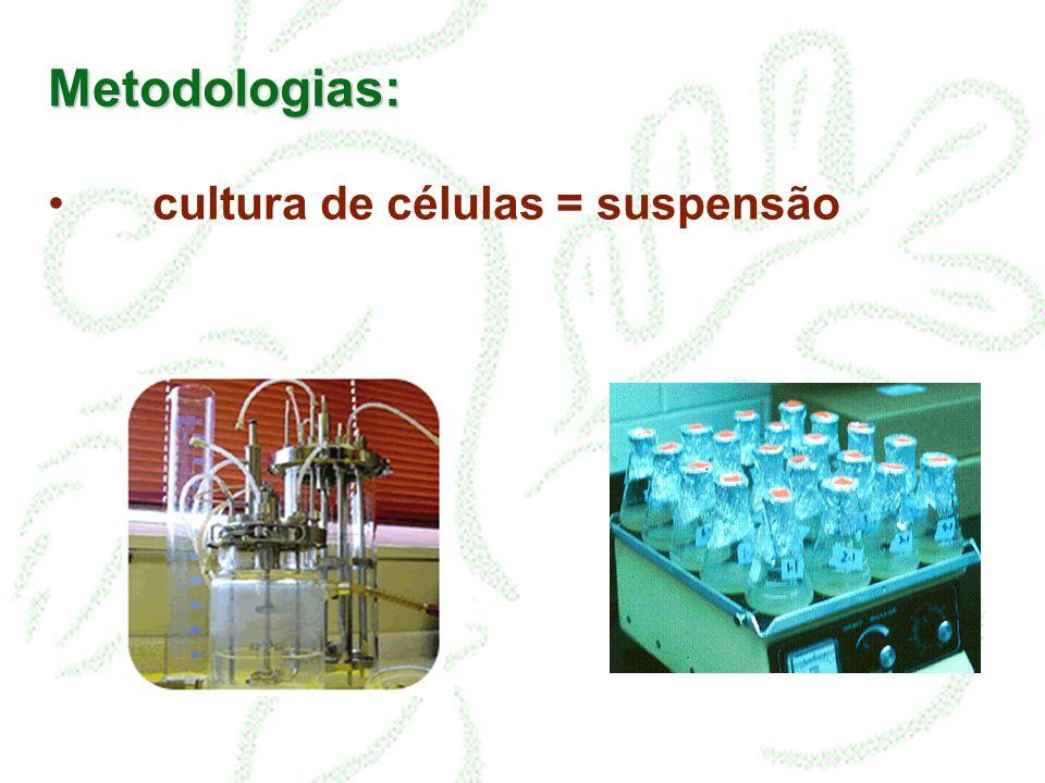 Metodologias: Origem das células: meristema calocultura em suspensão Calo = massa de células indiferenciadas de proliferação contínua e mais ou menos desordenada.