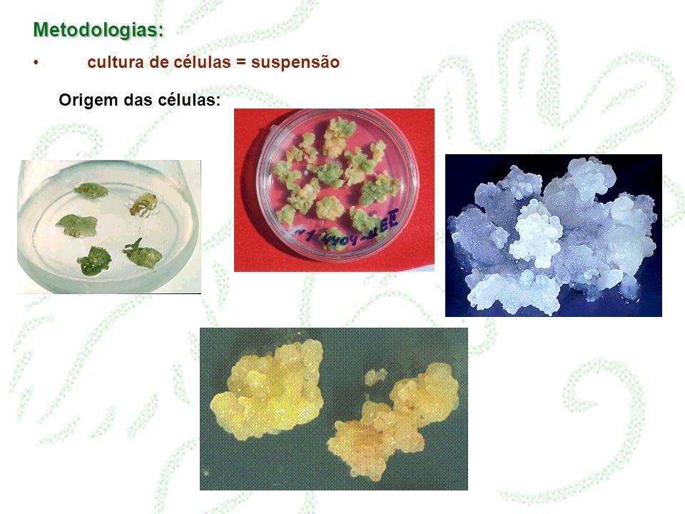 Metodologias: cultura de células = suspensão Origem das células: