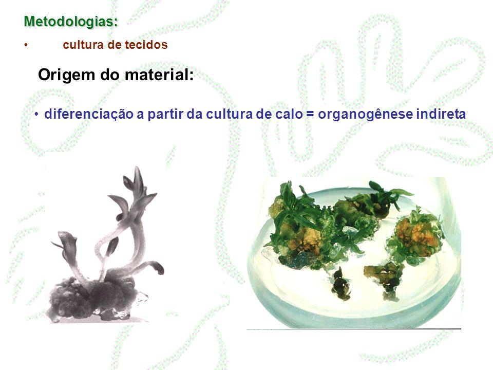 Metodologias: cultura de tecidos Origem do material: Tecidos meristemáticos = organogênese direta