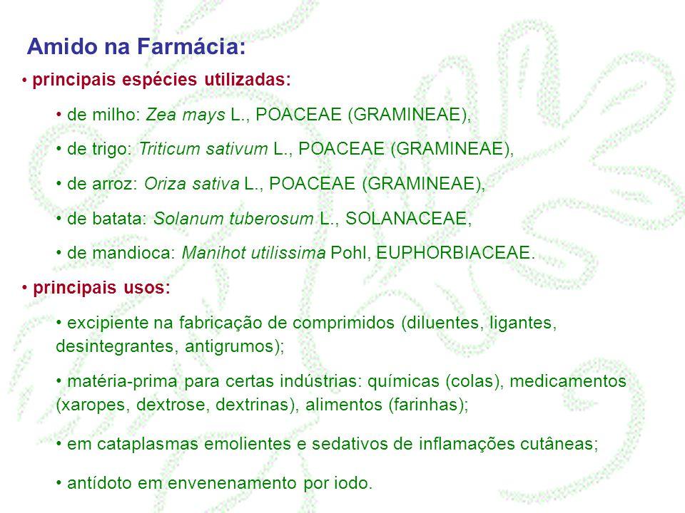 Amido na Farmácia: principais espécies utilizadas: de milho: Zea mays L., POACEAE (GRAMINEAE), de trigo: Triticum sativum L., POACEAE (GRAMINEAE), de