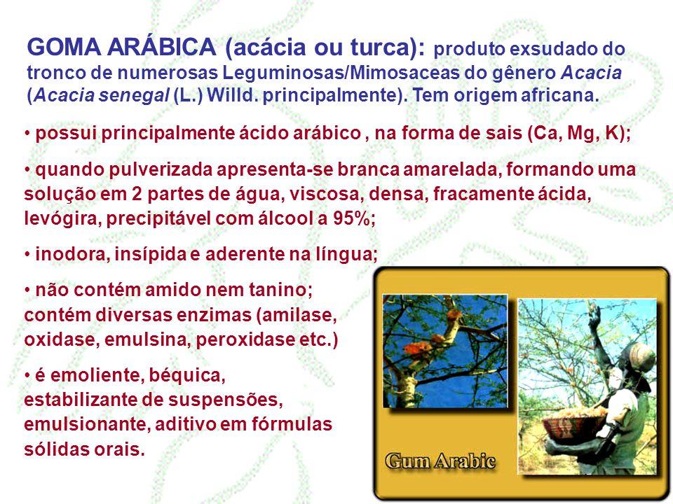 GOMA ARÁBICA (acácia ou turca): produto exsudado do tronco de numerosas Leguminosas/Mimosaceas do gênero Acacia (Acacia senegal (L.) Willd. principalm