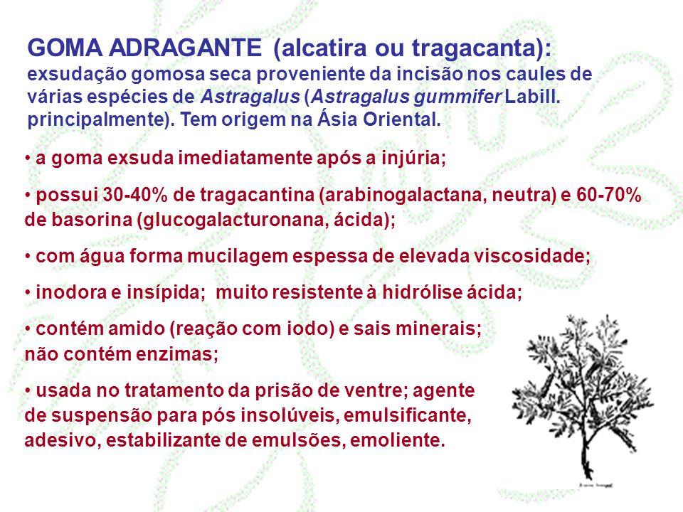 GOMA ADRAGANTE (alcatira ou tragacanta): exsudação gomosa seca proveniente da incisão nos caules de várias espécies de Astragalus (Astragalus gummifer