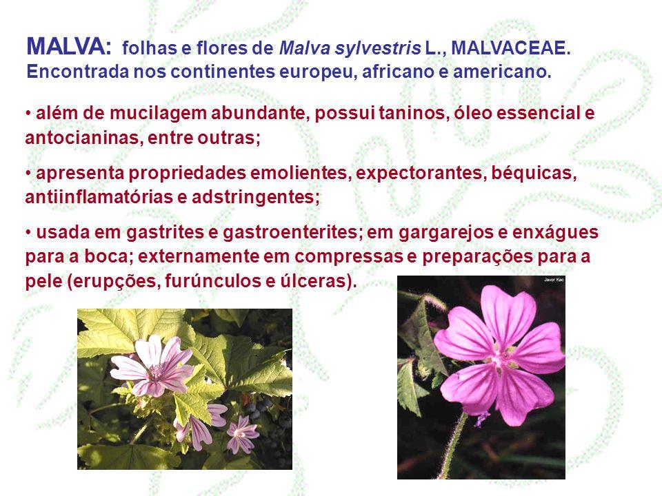 MALVA: folhas e flores de Malva sylvestris L., MALVACEAE. Encontrada nos continentes europeu, africano e americano. além de mucilagem abundante, possu