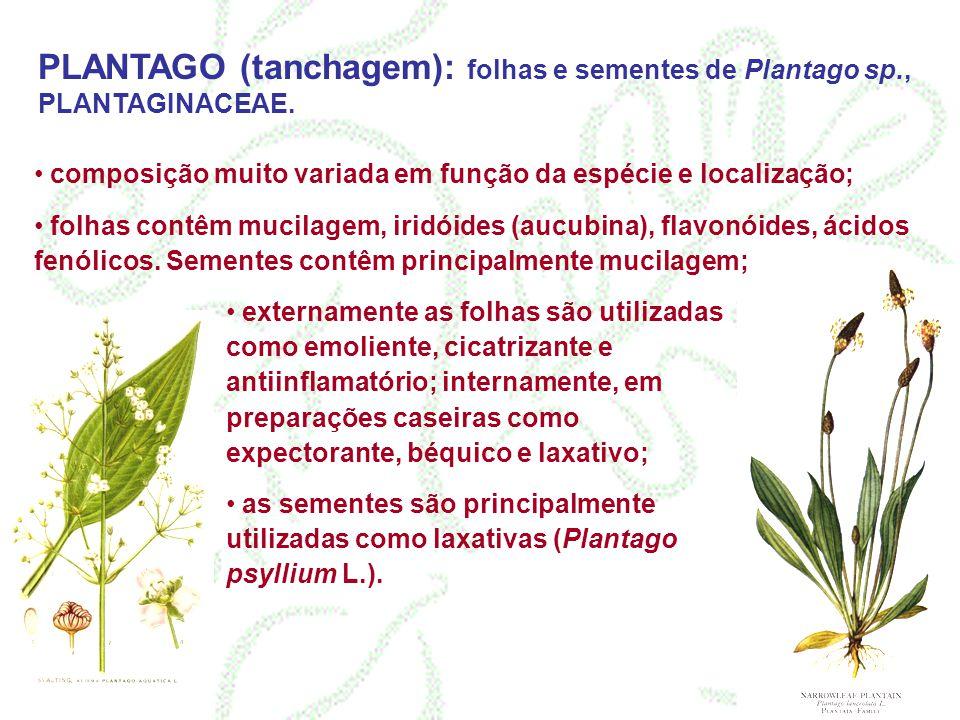 PLANTAGO (tanchagem): folhas e sementes de Plantago sp., PLANTAGINACEAE. composição muito variada em função da espécie e localização; folhas contêm mu