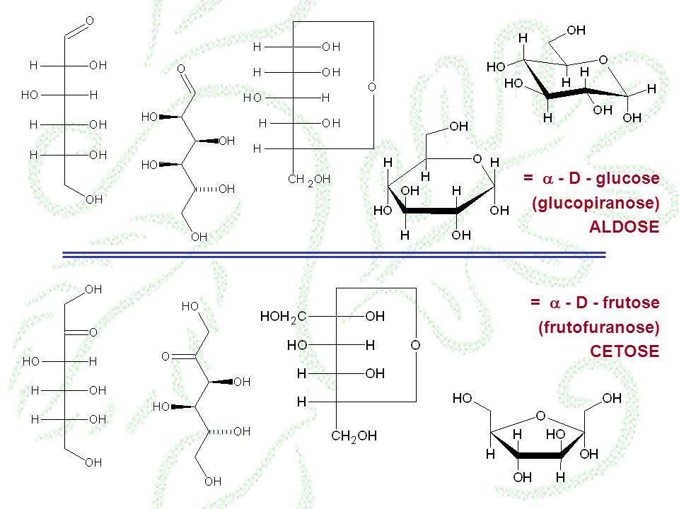 = - D - glucose (glucopiranose) ALDOSE = - D - frutose (frutofuranose) CETOSE