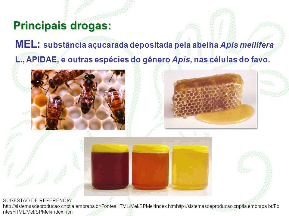 Principais drogas: MEL: substância açucarada depositada pela abelha Apis mellifera L., APIDAE, e outras espécies do gênero Apis, nas células do favo.