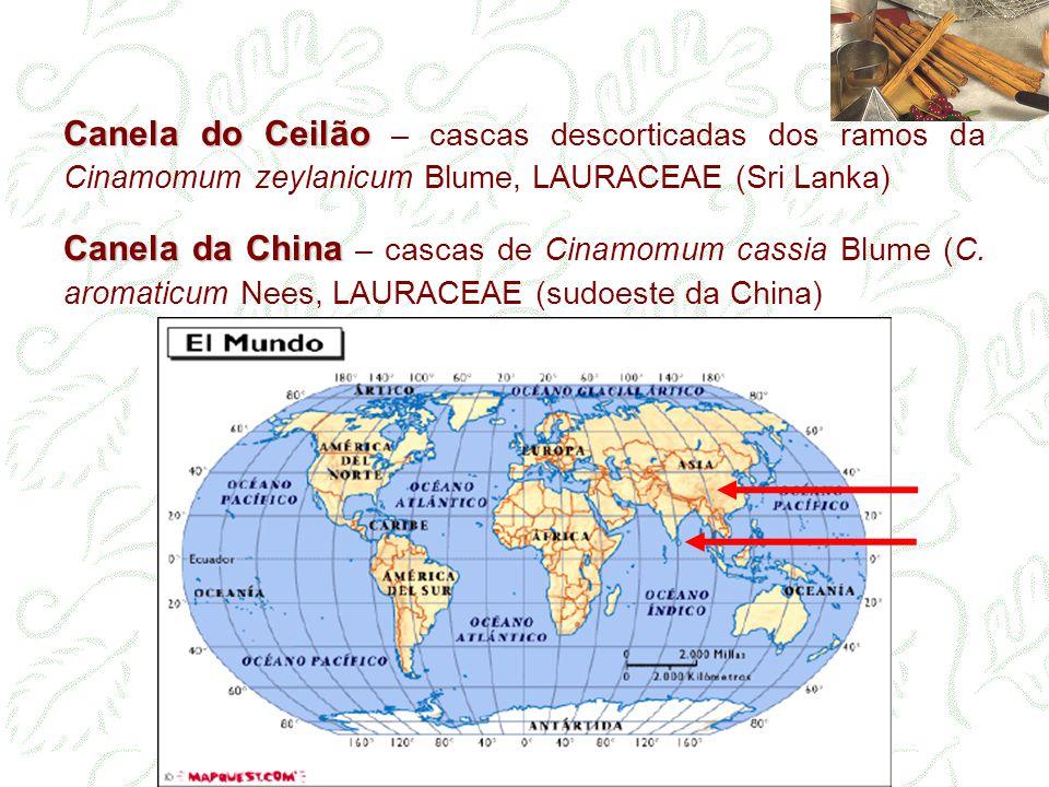 Canela do Ceilão Canela do Ceilão – cascas descorticadas dos ramos da Cinamomum zeylanicum Blume, LAURACEAE (Sri Lanka) Canela da China Canela da Chin