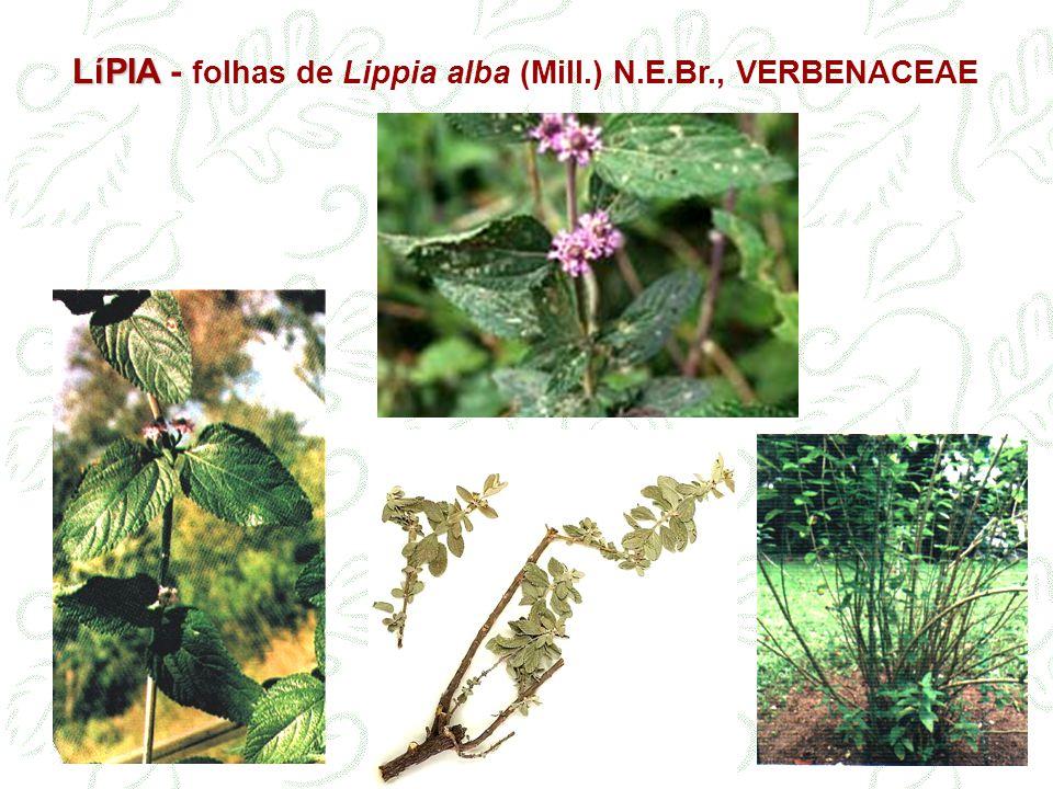 LíPIA LíPIA - folhas de Lippia alba (Mill.) N.E.Br., VERBENACEAE