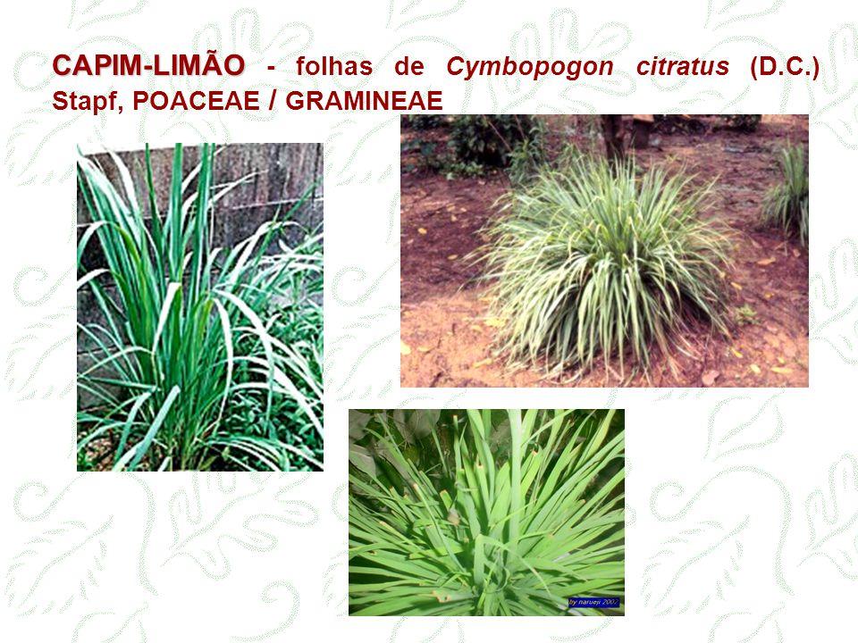 CAPIM-LIMÃO CAPIM-LIMÃO - folhas de Cymbopogon citratus (D.C.) Stapf, POACEAE / GRAMINEAE