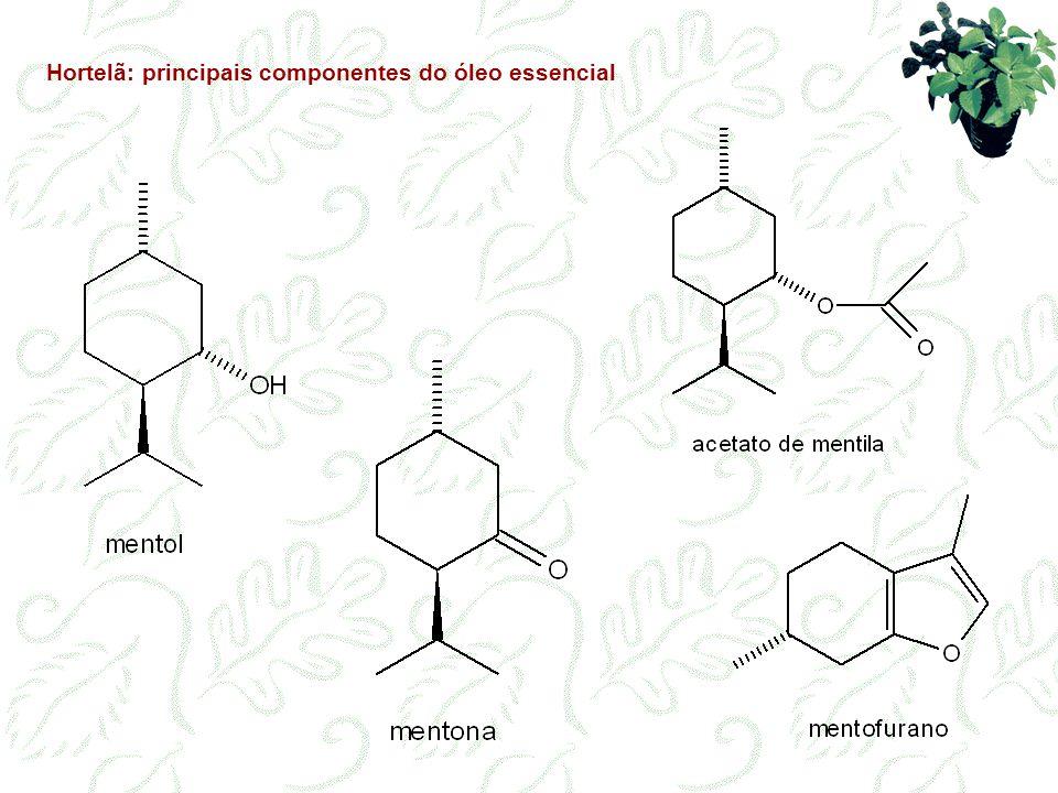 Hortelã: principais componentes do óleo essencial