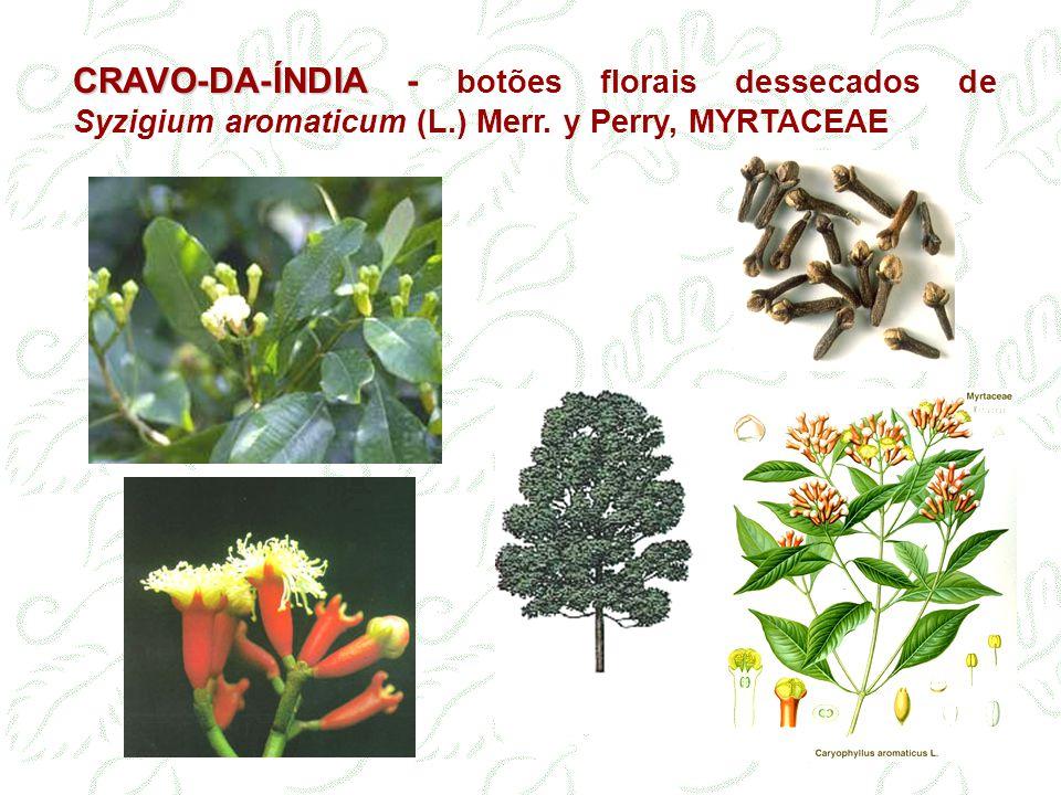 CRAVO-DA-ÍNDIA CRAVO-DA-ÍNDIA - botões florais dessecados de Syzigium aromaticum (L.) Merr. y Perry, MYRTACEAE
