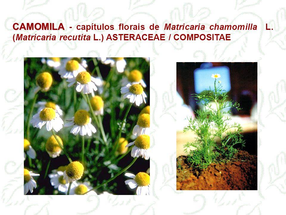 CAMOMILA 0,2 a 1,8 % de óleo essencial.Não deve conter menos que 0,4 % (uso farmacêutico).