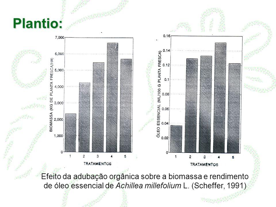 Plantio: Efeito da adubação orgânica sobre a biomassa e rendimento de óleo essencial de Achillea millefolium L. (Scheffer, 1991)