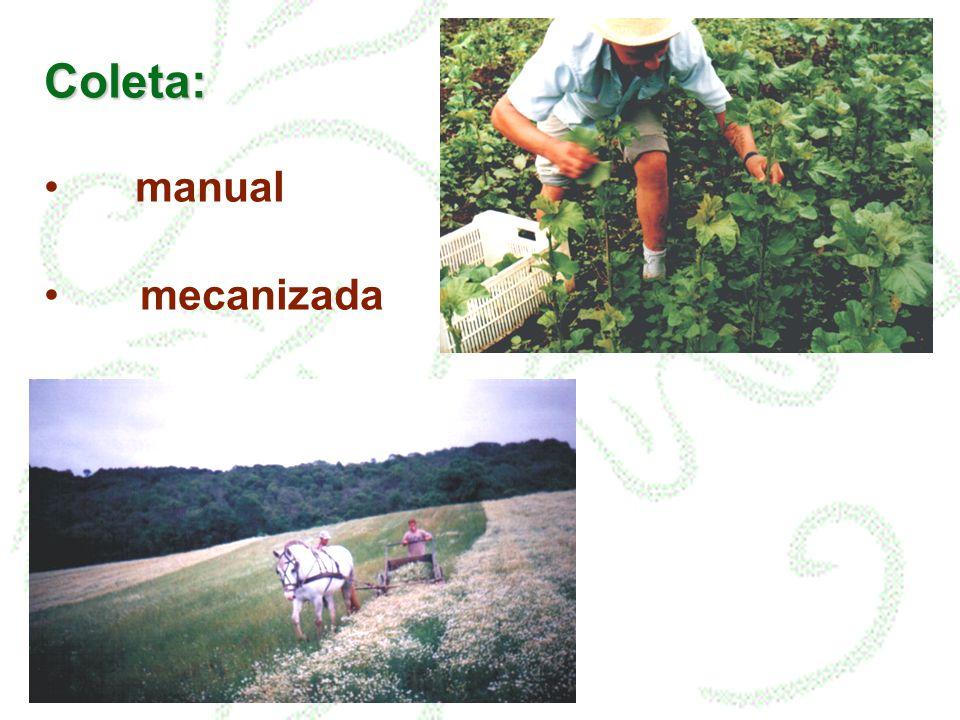 Coleta: manual mecanizada