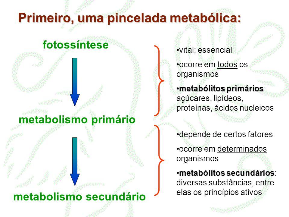 Primeiro, uma pincelada metabólica: fotossíntese metabolismo primário metabolismo secundário vital; essencial ocorre em todos os organismos metabólito
