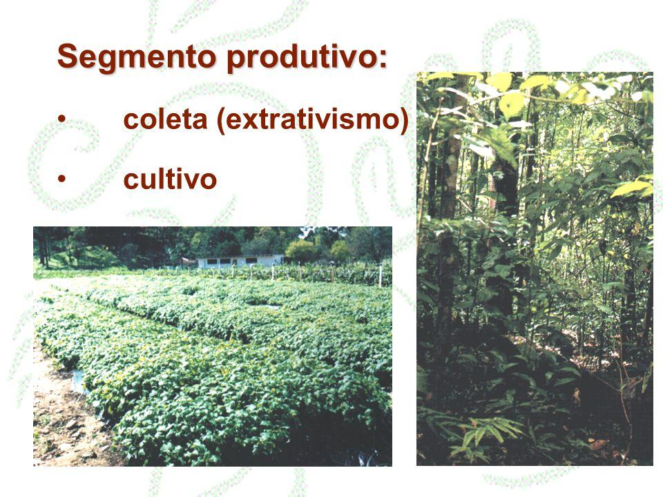 Segmento produtivo: Segmento produtivo: procedimentos coleta (extrativismo) cultivo plantio coleta / classificação secagem / estabilização armazenamento