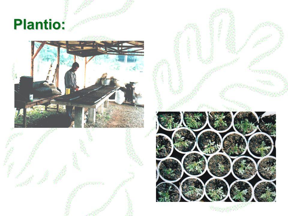 Plantas Medicinais planta in natura extrato total extrato purificado princípio ativo isolado purificação semi-síntese fitocomplexo medicamento químico medicamento fitoterápico remédio fitoterápico manipulação / industrialização