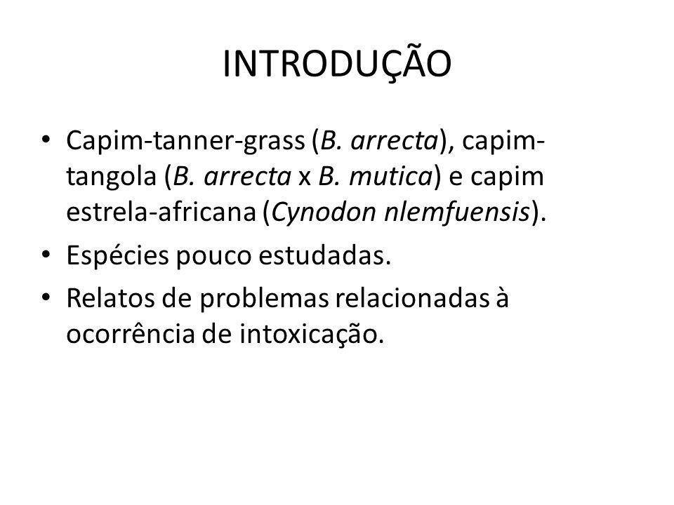 INTRODUÇÃO Capim-tanner-grass (B. arrecta), capim- tangola (B. arrecta x B. mutica) e capim estrela-africana (Cynodon nlemfuensis). Espécies pouco est