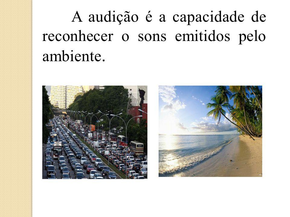 A audição é a capacidade de reconhecer o sons emitidos pelo ambiente.