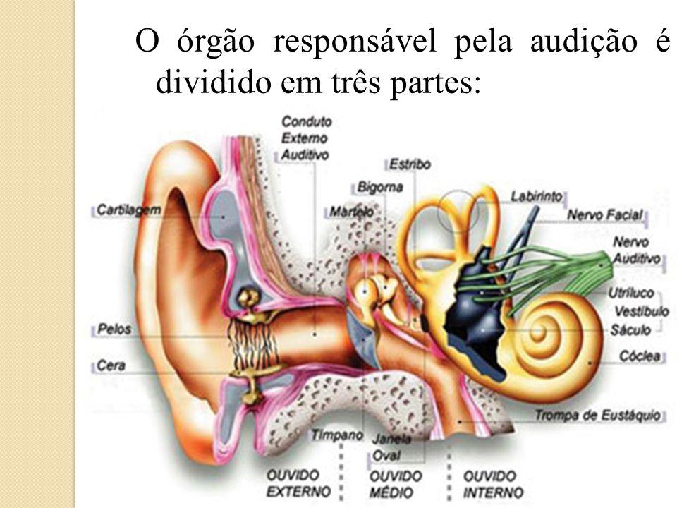 Orelha Externa: É formada: Pavilhão auditivo ou auricular; Glândulas sebáceas; Meato acústico externo (ou conduto auditivo externo); Pavilhão Auricular Conduto auditivo