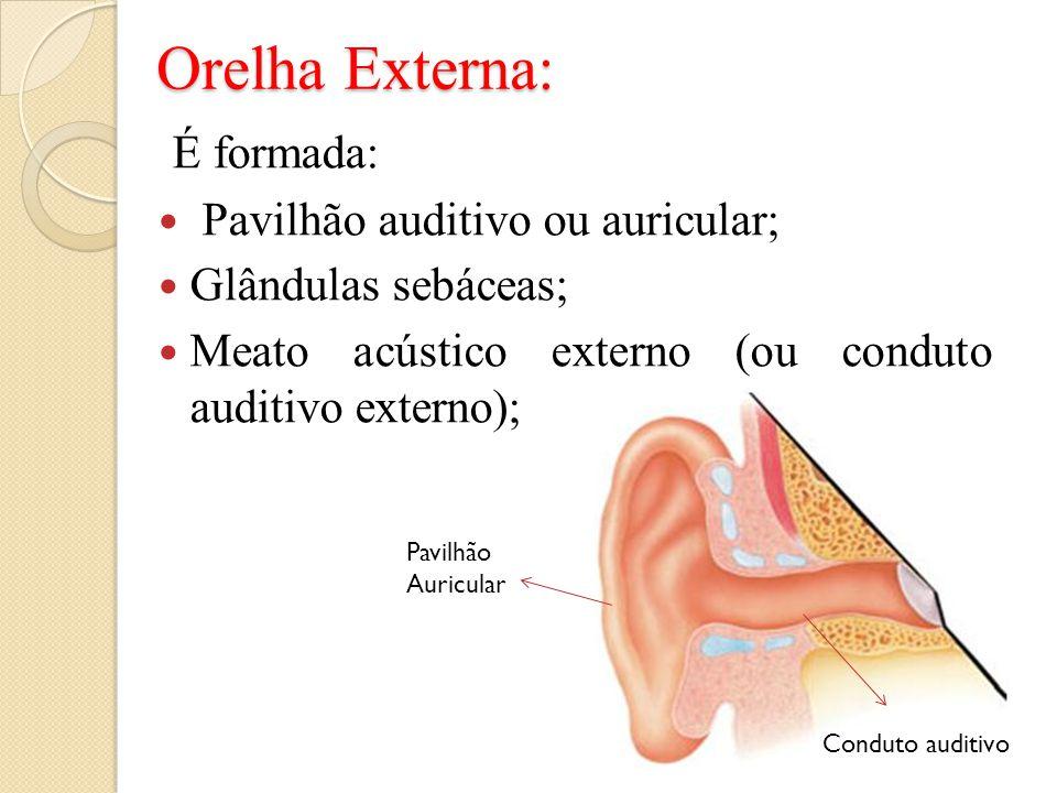 Orelha Externa: É formada: Pavilhão auditivo ou auricular; Glândulas sebáceas; Meato acústico externo (ou conduto auditivo externo); Pavilhão Auricula