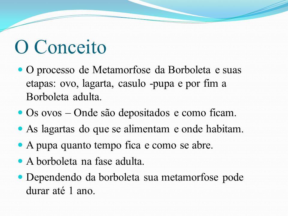 O Conceito O processo de Metamorfose da Borboleta e suas etapas: ovo, lagarta, casulo -pupa e por fim a Borboleta adulta. Os ovos – Onde são depositad
