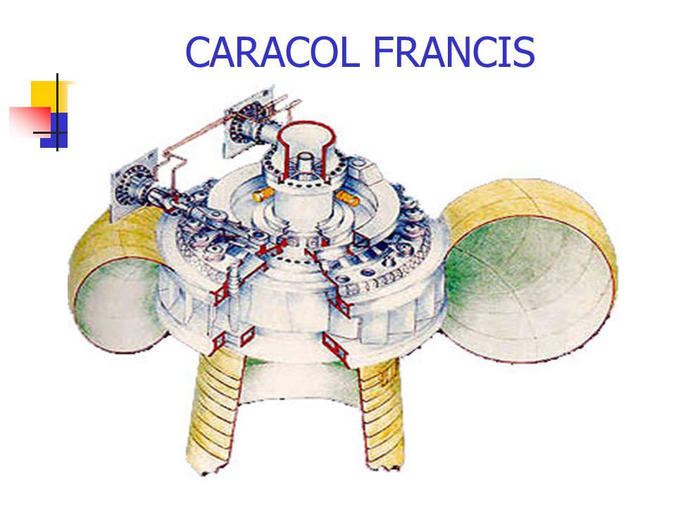 CARACOL FRANCIS