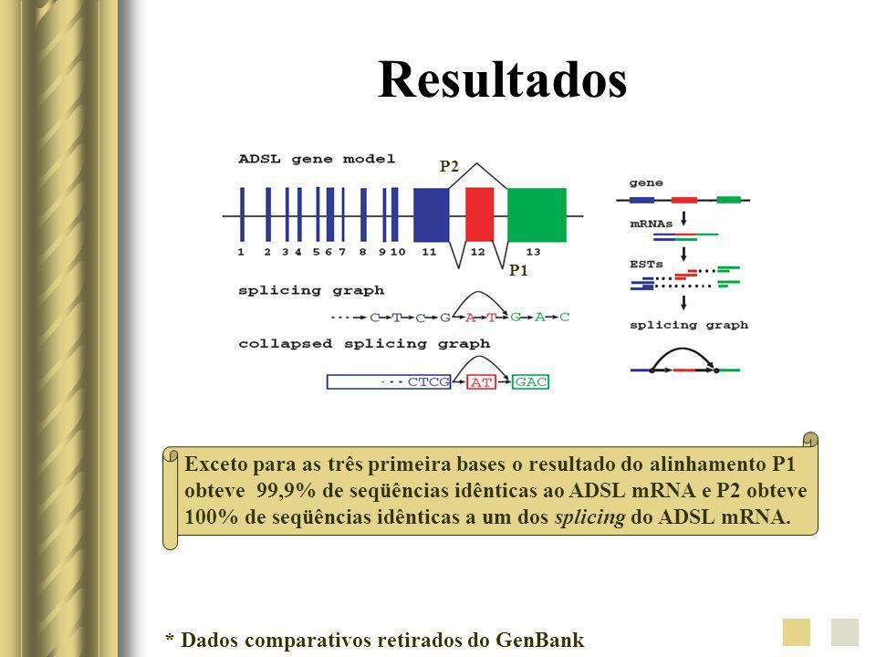 Resultados Exceto para as três primeira bases o resultado do alinhamento P1 obteve 99,9% de seqüências idênticas ao ADSL mRNA e P2 obteve 100% de seqü
