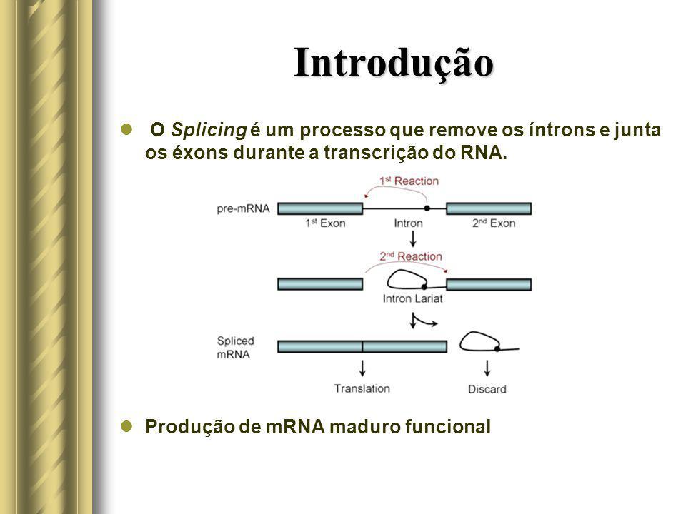 Introdução O Splicing é um processo que remove os íntrons e junta os éxons durante a transcrição do RNA. Produção de mRNA maduro funcional