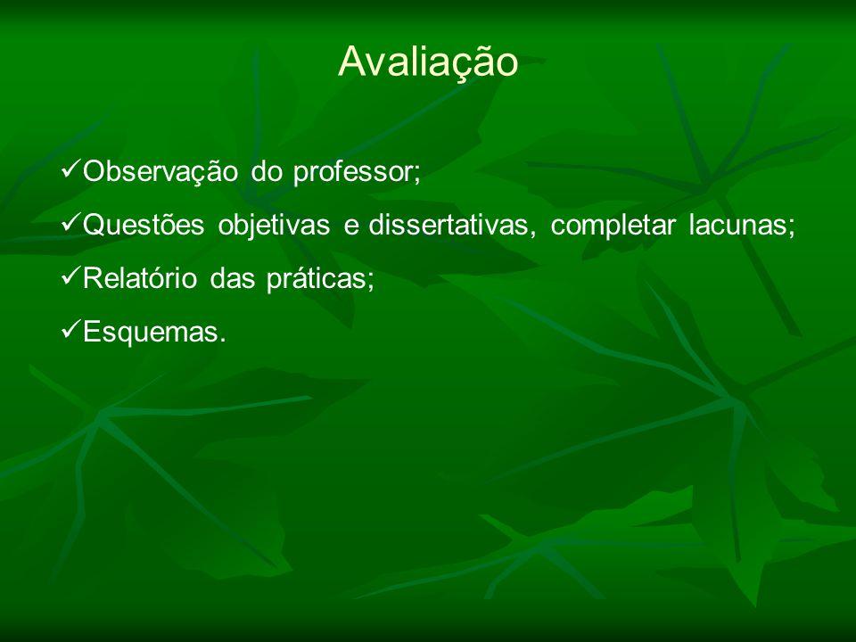 Observação do professor; Questões objetivas e dissertativas, completar lacunas; Relatório das práticas; Esquemas. Avaliação