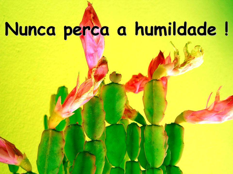 Nunca perca a humildade !