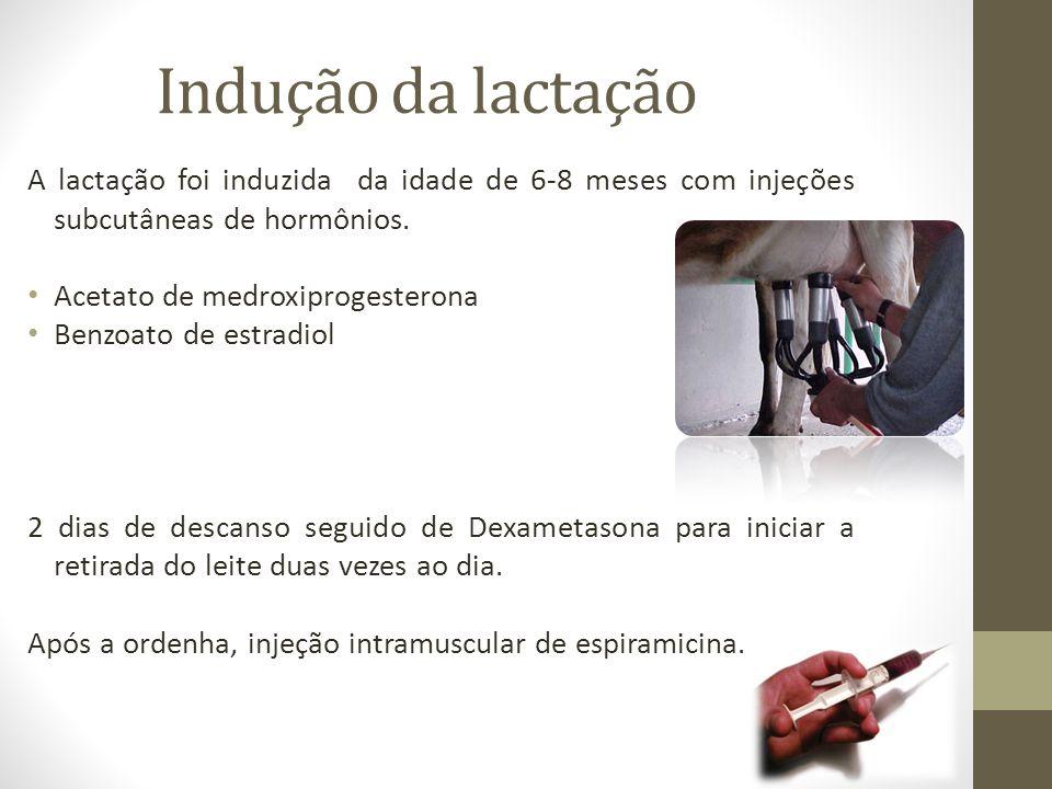 Indução da lactação A lactação foi induzida da idade de 6-8 meses com injeções subcutâneas de hormônios. Acetato de medroxiprogesterona Benzoato de es